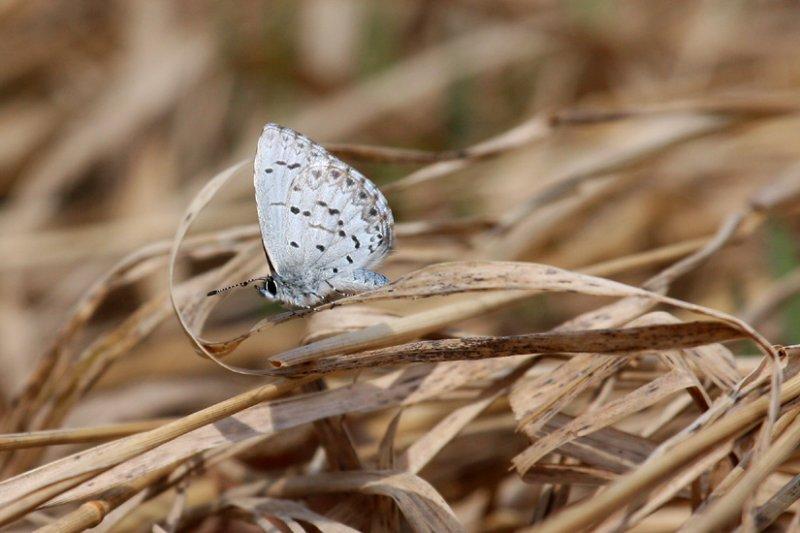 Spring Azure 0825