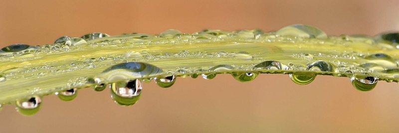 Drops 4