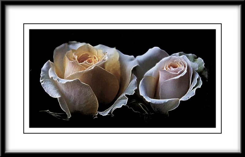two pretty roses...