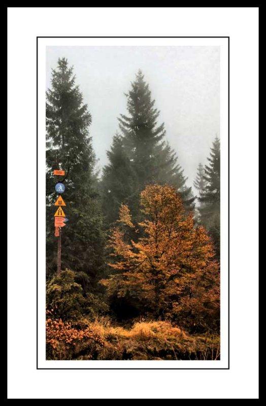 tall trees...
