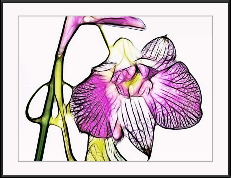Thailand orchid...