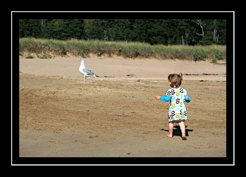 Ooooh, seagull