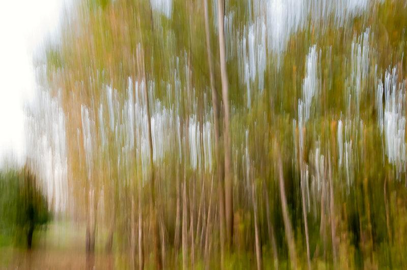 Dance Of Fall