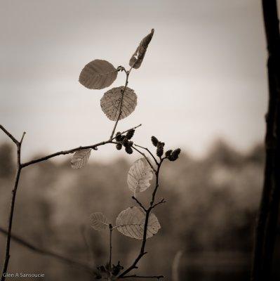 Last Leaves (Sepia)