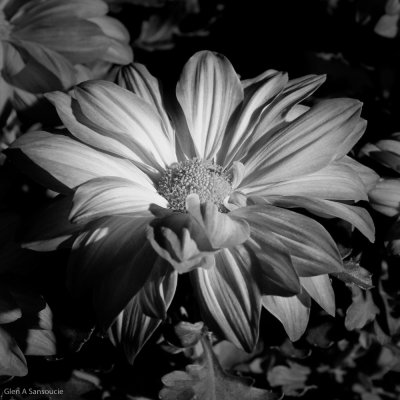 BW Fall Floral