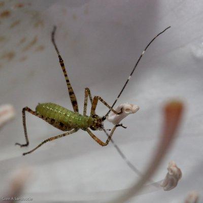 Flower Eating Bug