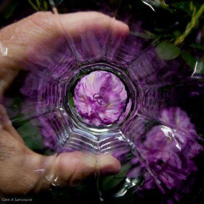 Through the drinking glass - Rhodadendrum