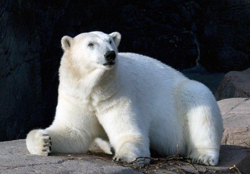 DSC_4145 Polar bear