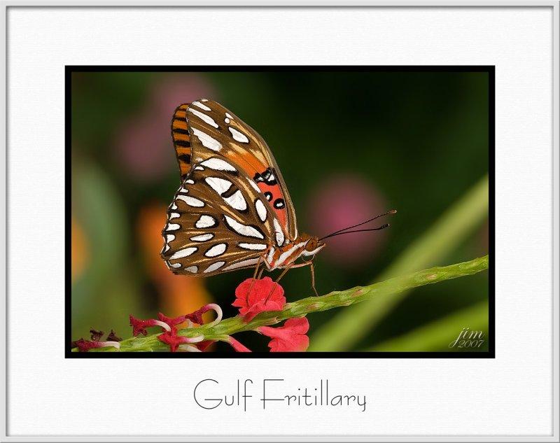 Brochure Gulf Fritillary.jpg