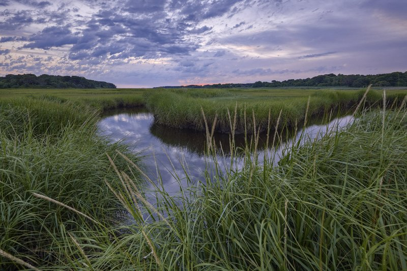 July : Quivett Creek