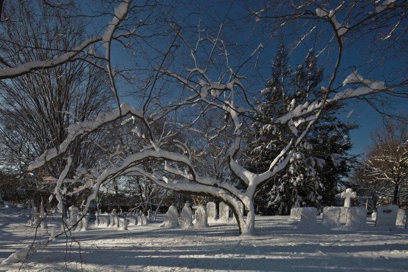 January : Mt Auburn Cemetery