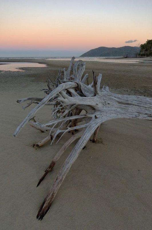Dead tree on beach, early morning (_DSC0137)