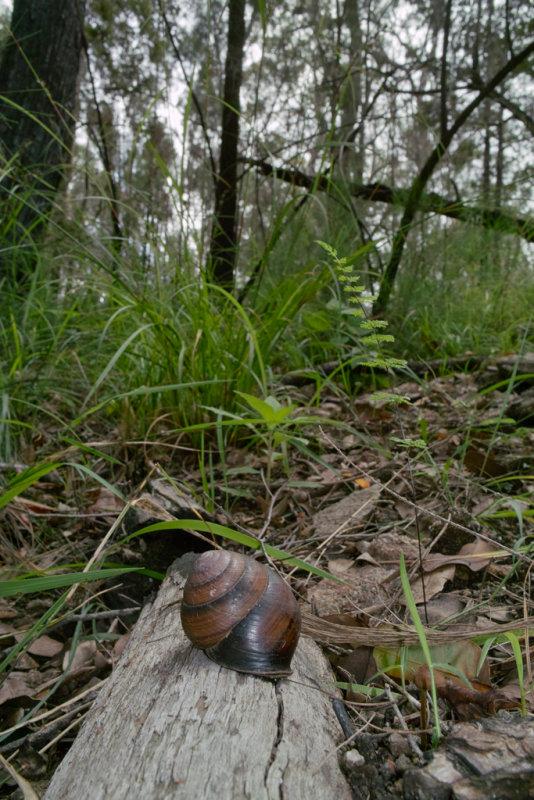 Land snail<p>SDIM0530