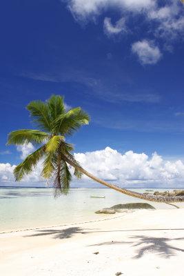 indian ocean13.jpg