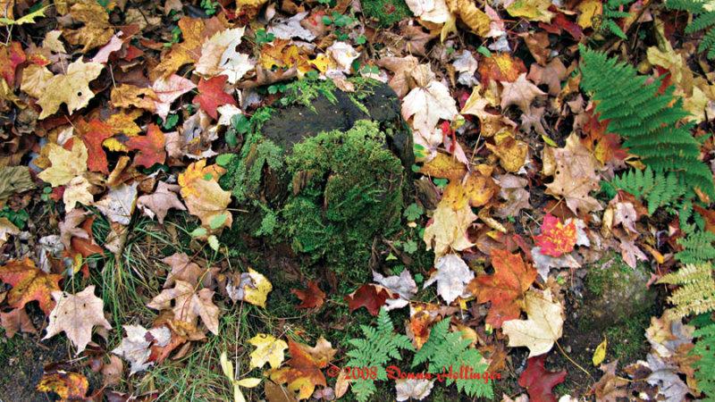 Ferns, Lichen and Autmn Leaves