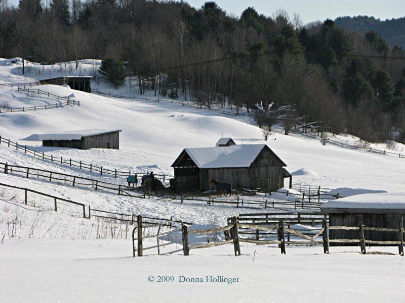 Horses at Huntington Farms After A Snow
