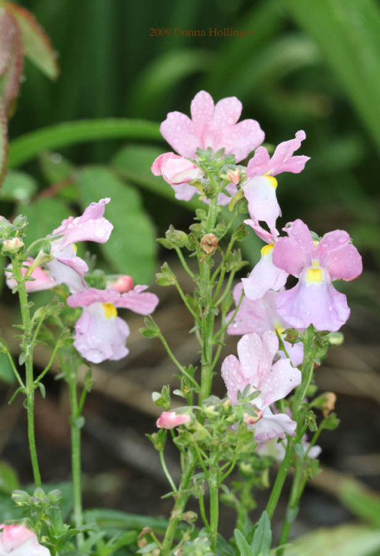 Pink and Lavender Flowers
