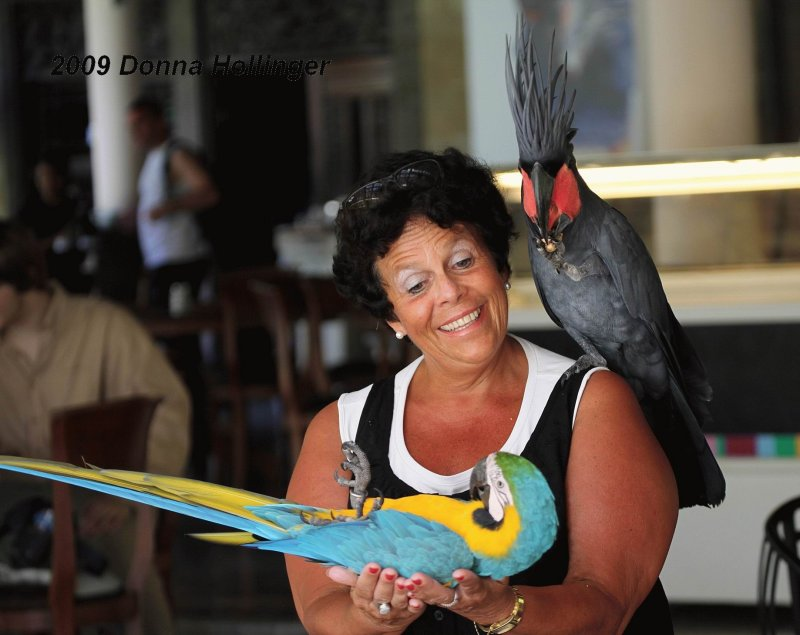 Woman wearing A Cockatoo and carrying a Macaw!