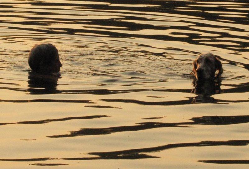 Swimming on Golden Pond