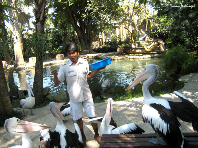 Balinese Birdman
