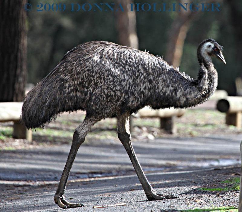 EMU Walking