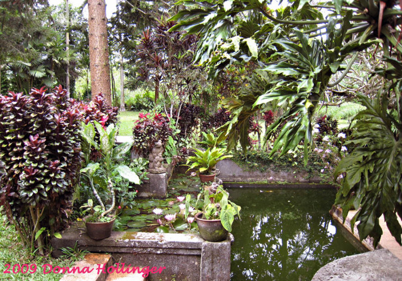 Pupuan Garden