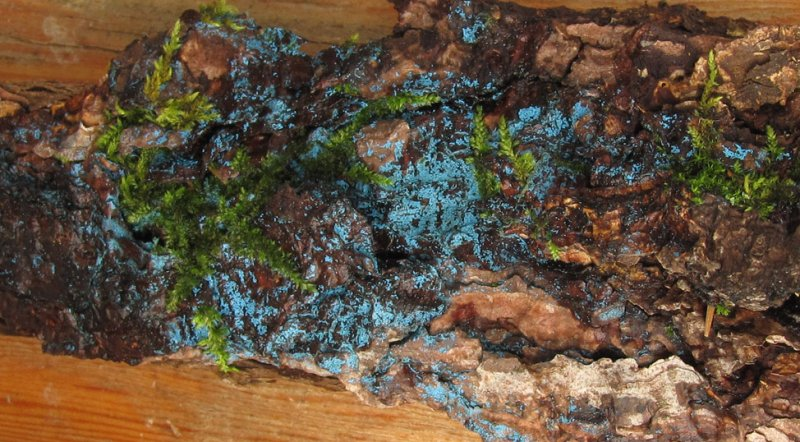 Colorful Bark Fungi Lee Found