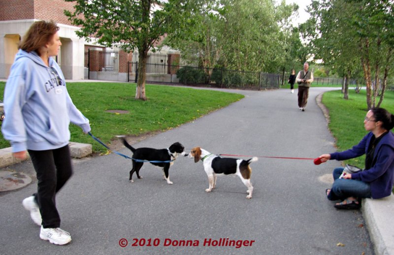 Barbara and Stella Walking at Fresh Pond