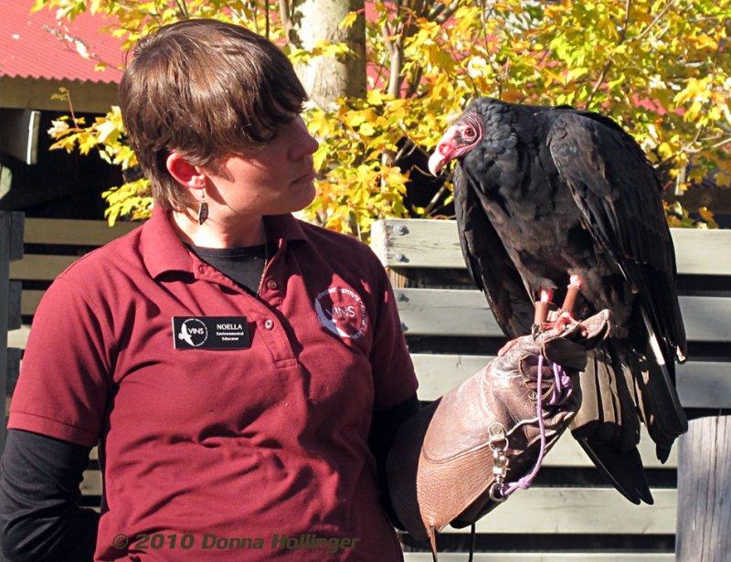 Female Vulture and Noella