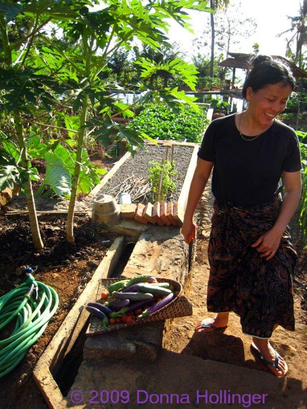 Dar harvesting eggplants and peppers