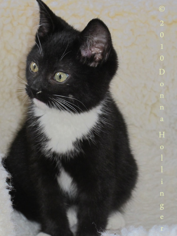 Rocky little kitty