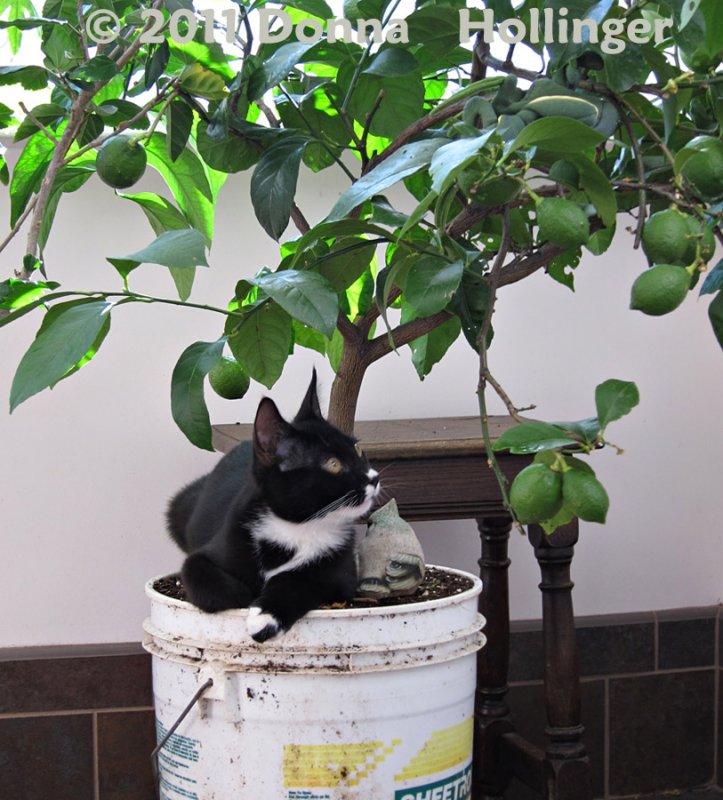 Jimi Watching the Lemons Grow