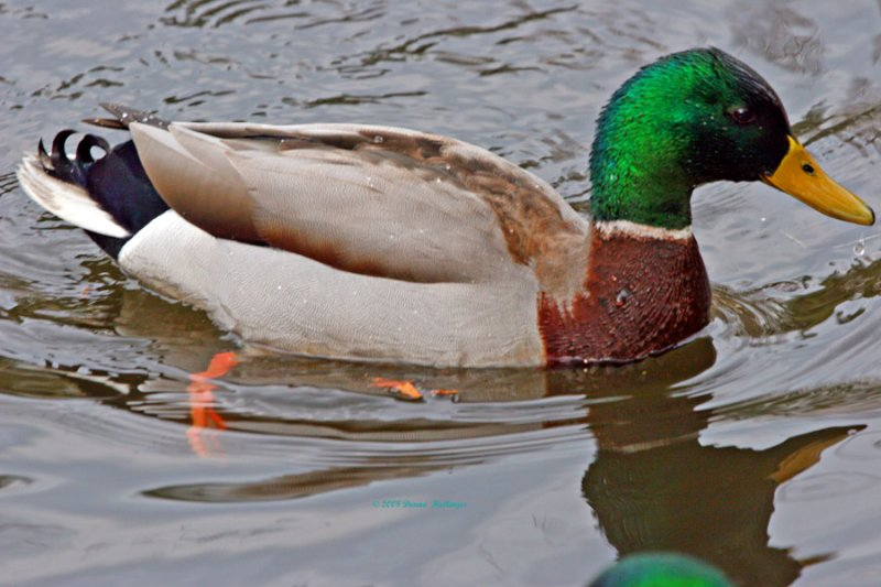My New Green Feathers