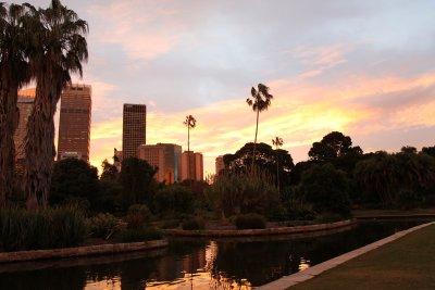 Sydney Skyline from the Botanical Garden