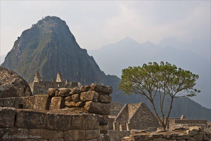 Tree in Machu Picchu