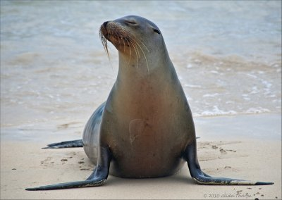 Sea Lion Poses