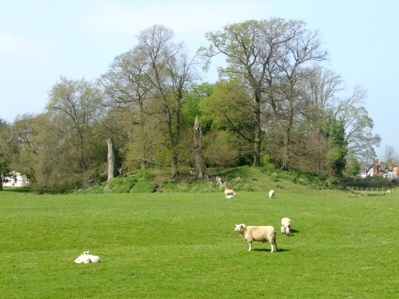 Kingsland motte and bailey