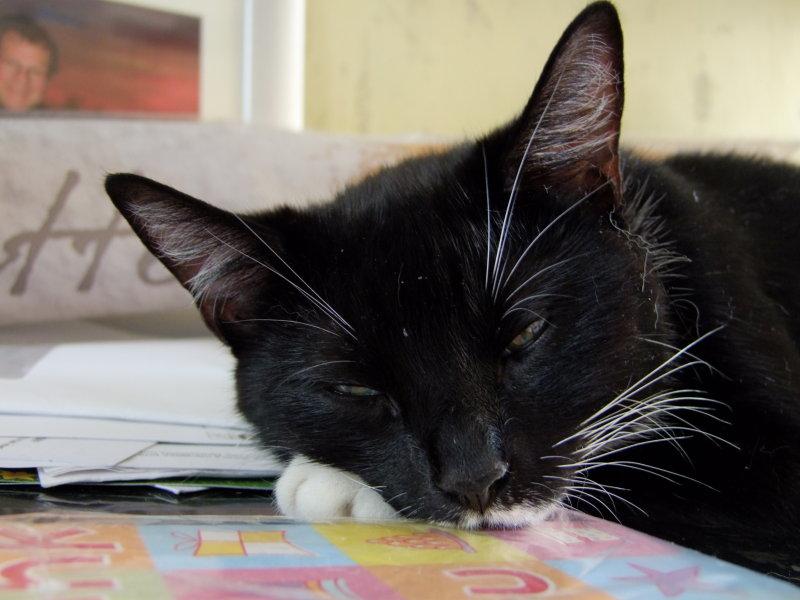 Jess , taking a well earned rest.