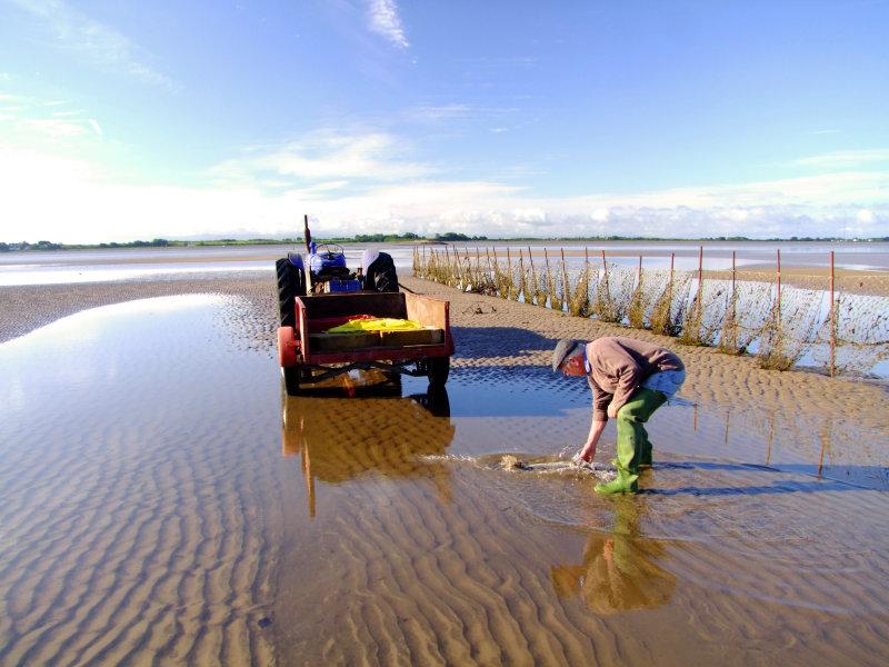 Washing   the  sea  bass.
