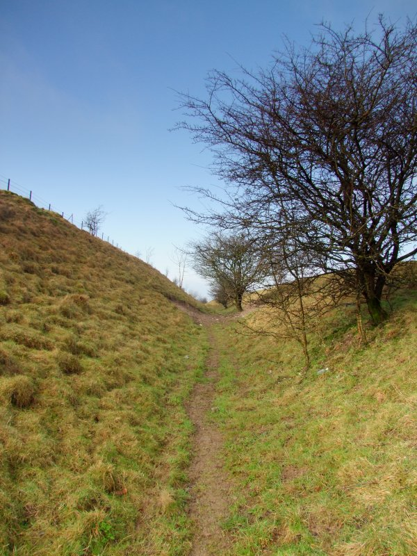 Looking  west  to  the  summit  on  Morgans  Hill.