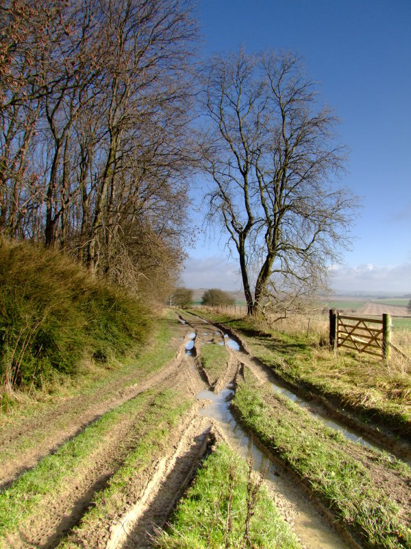 Wansdyke  crosses  this  track, L  to  R ,via  the  gate.