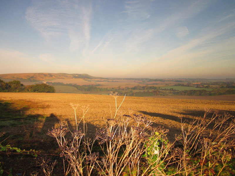 The  South  Downs  from  Windover  Hill.