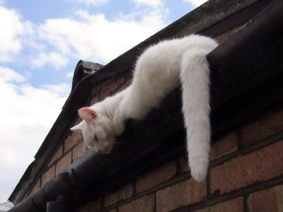 Dad ! Theres  something  blocking  the  gutter !