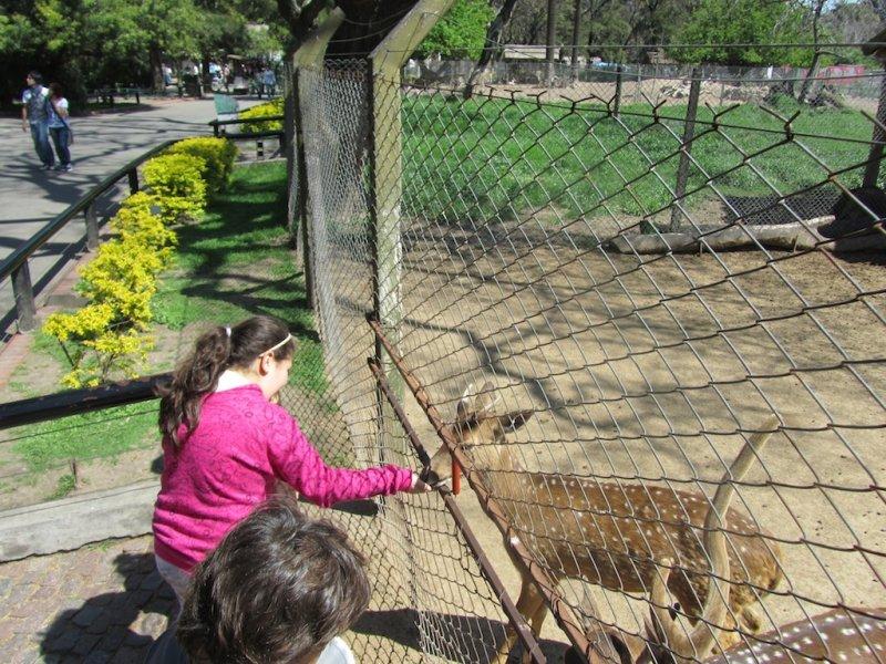 both kids and animals enjoyed the feeding