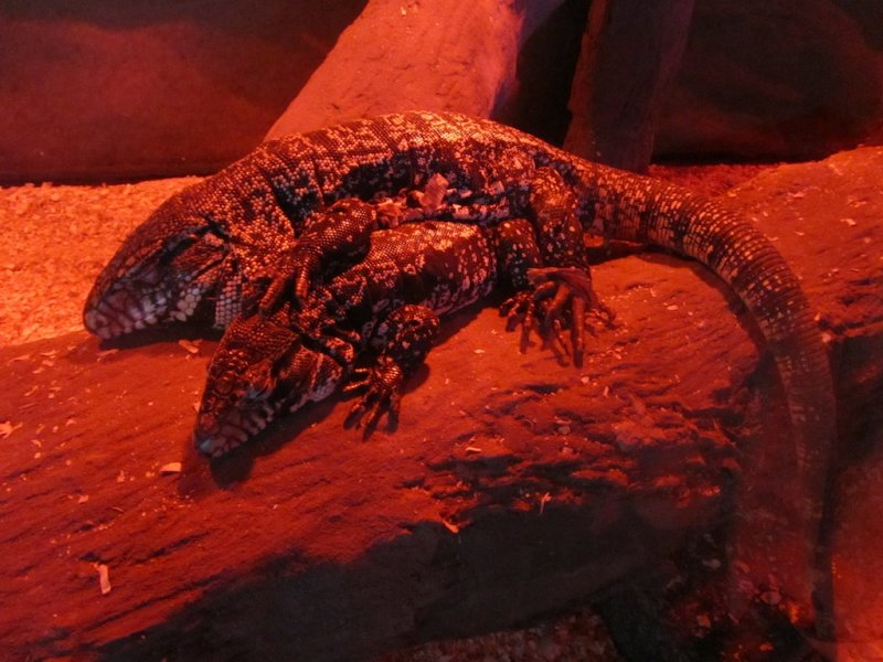 in the reptile house