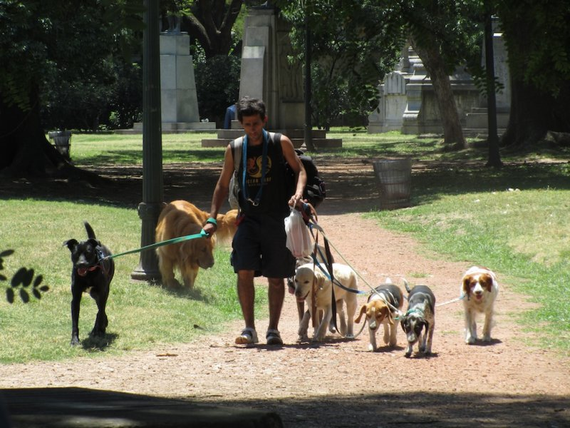 Buenos Aires famous dogwalkers...