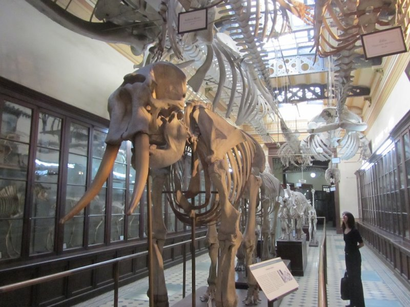 downstairs in the hall of comparative osteology