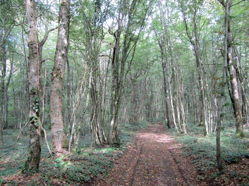 heres the Bois de Consenvoye, one of three named battles