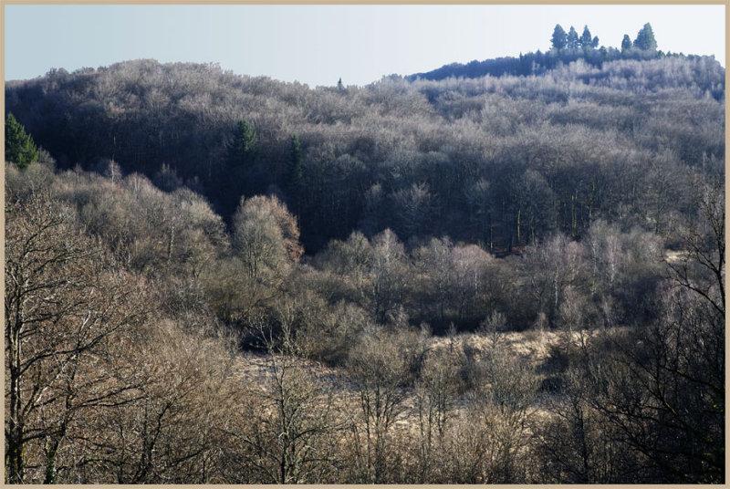 La forêt Limousine vers Jabreilles