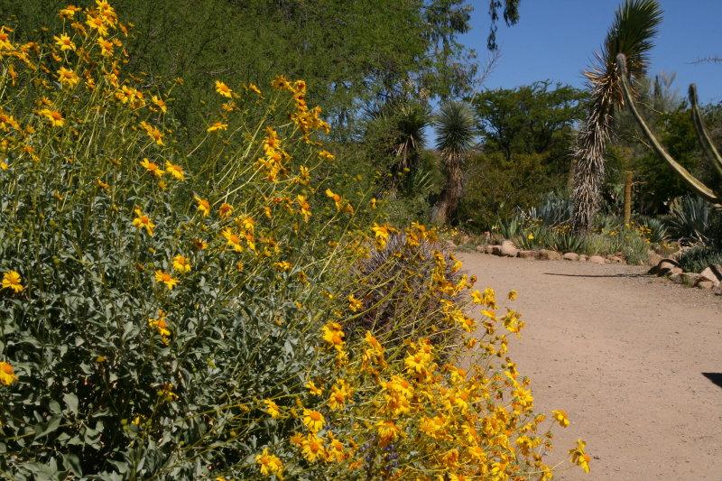 Main Trail through the Cactus garden